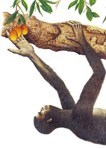 File:Tree dweller.jpg