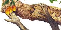 Tree-Dweller