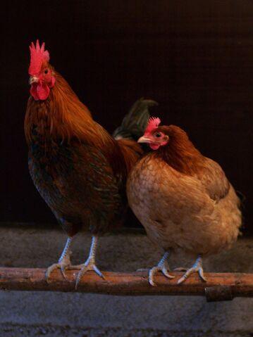File:Female pair (2).jpg