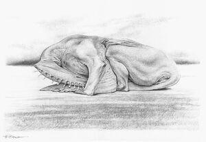 Sleeping stripewing