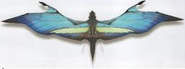 Velocipterus alora