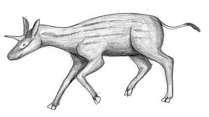 Unicornspaka