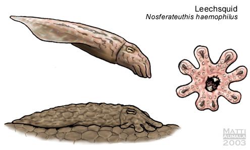 Nosferateuthis