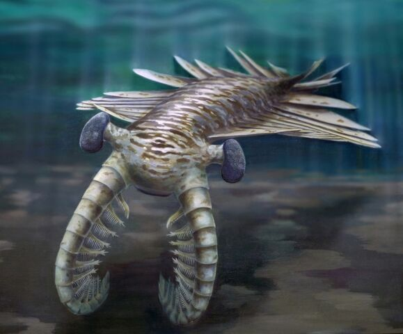 File:Anomalocaris reconstruction REDUCED.jpg
