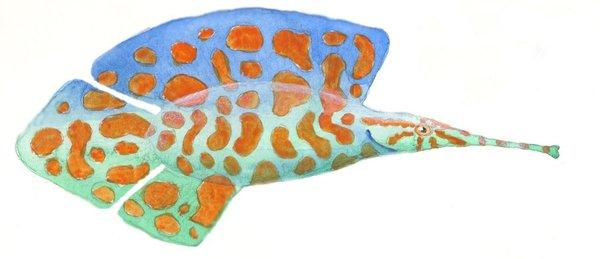 Opal ripplefin by sphenacodon