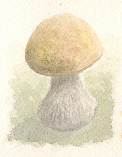 Barbell bolete by sphenacodon