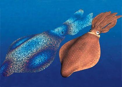 File:Rainbow squids.jpg
