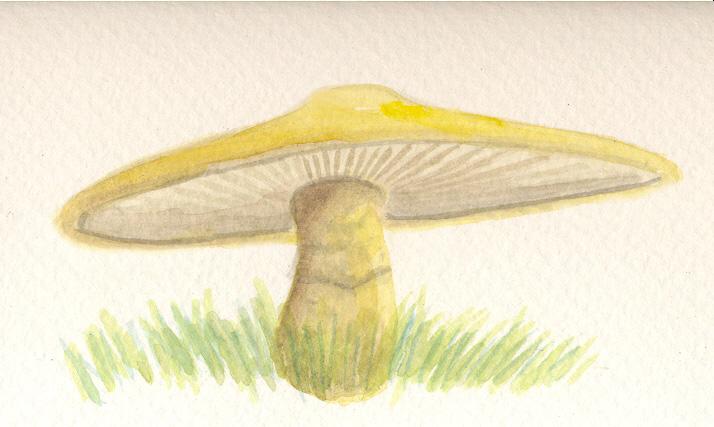 Sombrero mushroom by sphenacodon