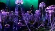 Jellyfish-bird