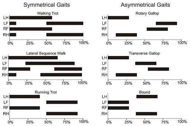 File:Gait graphs.jpg