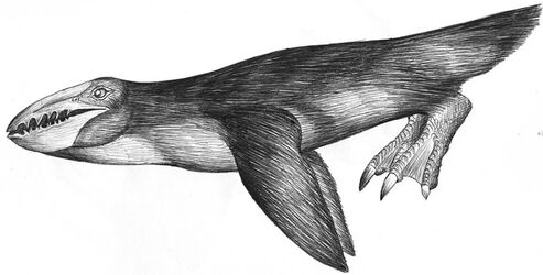 Whalehead-penguin