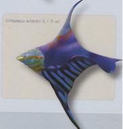 Ichthyosepia muttereri