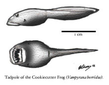 Cookiecutter-frog