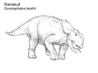 File:Durocephalus.jpg