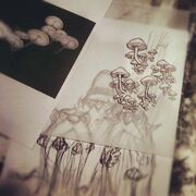 Shrooms-1-