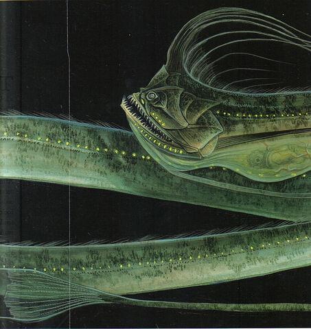 File:Serpiente marina del atlantico norte.jpg
