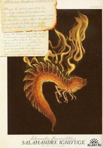 File:Fire Salamander.jpg