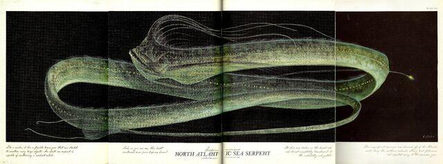 File:Atlantic Sea Serpent.jpg