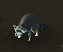 Plik:Raccoon.png