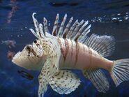 LunaLionfishReal