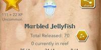 Marbled Jellyfish