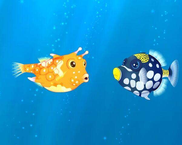 File:Grumpy Clown Triggerfish.jpg