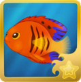 Flame Angelfish§Headericon