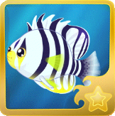 File:Barred Angelfish§Headericon.png