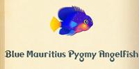 Blue Mauritius Pygmy Angelfish