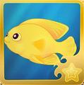 Herald's Angelfish§Headericon