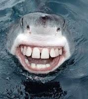 File:Friendly shark 2.jpg