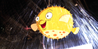 Unnamed pufferfish