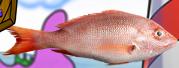 File:Bikini Bottom Brawlers Pink realistic fish.png