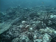Case of the Sponge Bob 148