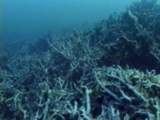 File:Case of the Sponge Bob 150.png