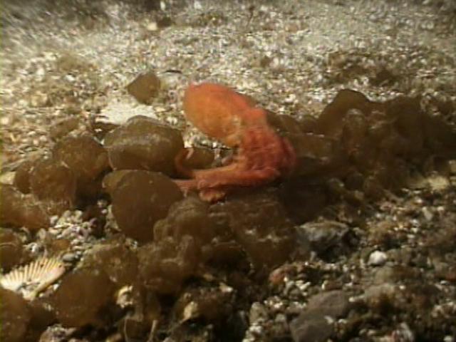 File:Case of the Sponge Bob 106.png
