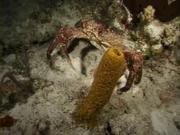 Case of the Sponge Bob 085