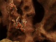 Case of the Sponge Bob 093