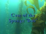 Case of the Sponge Bob 002