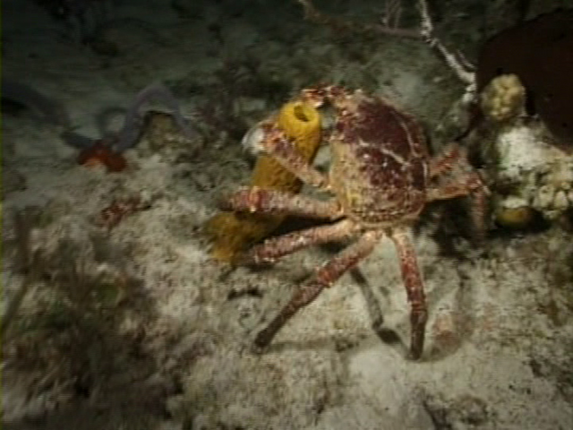 File:Case of the Sponge Bob 084.png