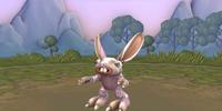 Bunny Froo Froo