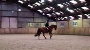 Sir Maestro - Trakehner Horse - Dressage horse