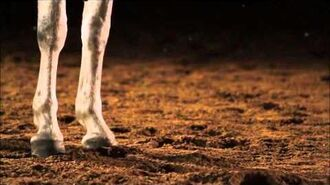 The Beauty Of The Lipizzaner Horse