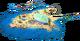 Coral Shelf L1