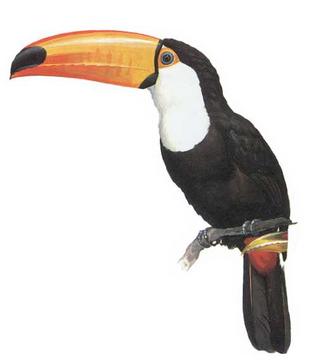 Tucana