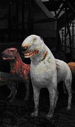 File:Blind dog.jpg