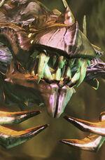Locust SC2 Head1