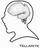 Tellarite brain diagram