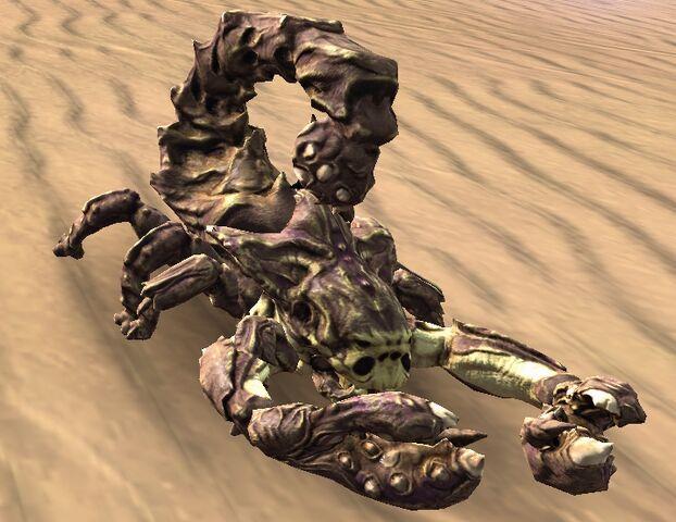 File:Sand scorpion.jpg