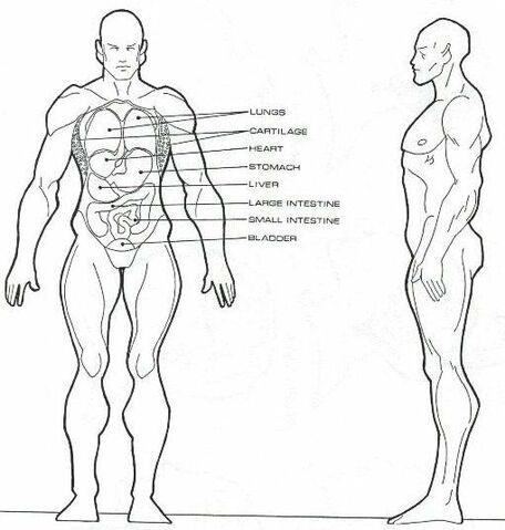 File:Homo eridani physiology.jpg